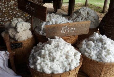 Ekologické pěstování bio bavlny v souladu Fair Trade zaručuje certifikát GOTS.